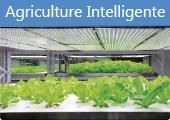 IOT agriculture intelligente